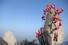 <b>힘든 길이라도 산타는 찾아갑니다!</b><br>22일 서울 북한산 만경대에서 산타 복장을 한 쌩곰산악회와 멀티암벽산악회 대원들이 2020년 산악인들의 안전산행 기원과 다가오는 크리스마스를 기념한 퍼포먼스를 하고 있다. 서울/연합뉴스
