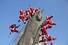 <b>''행복한 성탄 되세요!''</b><br>22일 서울 북한산 만경대에서 산타 복장을 한 쌩곰산악회와 멀티암벽산악회 대원들이 2020년 산악인들의 안전산행 기원과 다가오는 크리스마스를 기념한 퍼포먼스를 하고 있다. 서울/연합뉴스