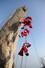 <b>산타는 산타</b><br> 22일 서울 북한산 만경대에서 산타 복장을 한 쌩곰산악회와 멀티암벽산악회 대원들이 2020년 산악인들의 안전산행 기원과 다가오는 크리스마스를 기념한 퍼포먼스를 하고 있다. 서울/연합뉴스