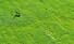 <b>노루의 봄 산책</b><br>20일 오전 제주시 한림읍 금악리의 한 초지에서 노루 한 마리가 뛰놀고 있다. 연합뉴스
