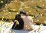 <B>봄 찾아 온 청계천</b><Br>최고 기온 17도가 예상되는 8일 서울 종로구 청계천에서 시민들이 휴식을 즐기고 있다. 연합뉴스