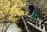 <B>마스크 쓰고 산책 즐기는 시민들</b><Br>코로나19 확산이 한풀 꺾이며 맞이한 주말인 15일 오후 광주 서구 풍암호수공원에서 마스크 쓴 시민들이 산책을 즐기고 있다. 연합뉴스
