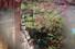 """<B>""""봄을 바라보다""""</b><Br>절기상 낮이 길어지기 시작하는 춘분(春分)인 20일 서울 강남구 봉은사에서 마스크를 쓴 시민이 만개한 홍매화를 바라보고 있다. 연합뉴스"""