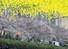 봄비가 내린 27일 부산 온천천시민공원에서 활짝핀 벚꽃 아래 시민이 산책하고 있다. 사진은 벚꽃이 물에 반영된 모습을 180도 회전한 모습. 연합뉴스