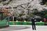 <b>코로나19로 폐쇄된 도쿄 벚꽃 명소</b><br> 신종 코로나바이러스 감염증(코로나19) 확산 우려로 폐쇄된 일본 도쿄 우에노 공원 내 벚꽃 산책로 주변에서 28일 경비원이 보초를 서고 있다. 도쿄 AFP/연합뉴스