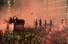 <b>리버풀, UEFA 챔피언스리그 우승 퍼레이드</b><br>2일(현지시간) 영국 북서부의 리버풀에서 2018-2019시즌 유럽축구연맹(UEFA) 챔피언스리그 우승팀인 리버풀 선수단이 색종이와 주홍빛 연막탄 속에 오픈카 축하 퍼레이드를 벌이고 있다. 리버풀/AFP 연합뉴스