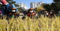 [Photo] Children experience rice farming in an urban landscape