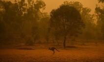 """""""불타는 호주, 기후위기가 삼킬 미래"""" 해시태그 타고 번지는 우려"""