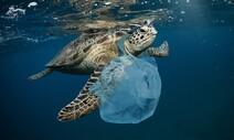 비닐봉지를 해파리로 오인? 바다거북 '플라스틱 냄새'에 끌려