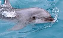 [카드뉴스] 둘 중 하나가 죽는 곳, 돌고래 수족관을 멈춰라