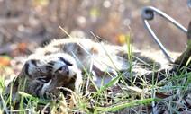 덫, 창문, 그물, 쓰레기에 죽어가는 야생동물의 현실