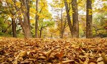[ESC] 낙엽은 원하는 삶을 살고 떨어졌을까
