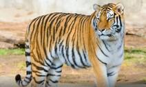 호랑이 서식지와 기후변화가 무슨 상관?
