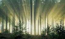 온난화 계속되면 식물의 탄소 흡수는 줄고 배출은 는다