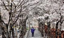 비염도 억울한데…봄철 꽃가루가 코로나 감염률도 높인다고?