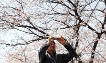 휴대폰에 벚꽃이 피었습니다