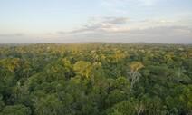 아마존 산림파괴 급증에도 인도네시아 열대우림 훼손은 급감