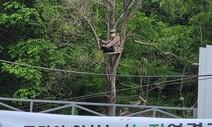 도봉주민 강우진씨가 나무 위로 올라간 이유는
