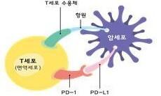 스크립스코리아, 3세대 면역 항암 항체치료제 개발 성공
