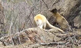 설악산에 하얀 담비, 계룡산엔 붉은 호반새…희귀동물 잇따라 포착
