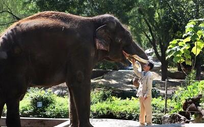 말하는  코끼리 '코식이', 외로워서 한국말 배웠다