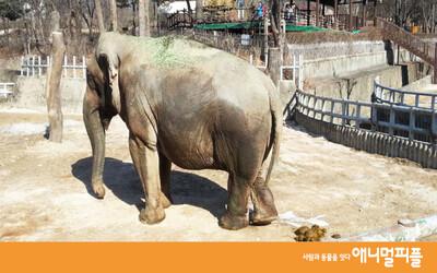 코끼리를 반려동물로 기를 수 있을까?