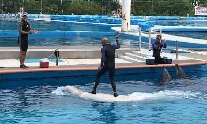 """""""벨루가 서핑, 동물 해칠 수 있는 최악의 체험"""""""