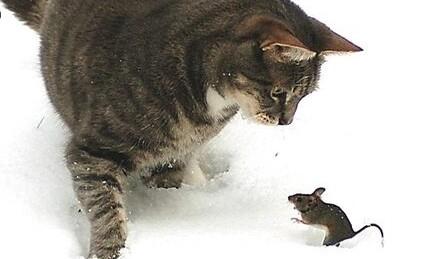 쥐약 먹은 고양이가 살기위해 먹는풀 괭이밥