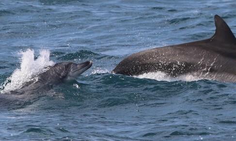 해녀와 남방큰돌고래, 더 오래 공존하기 위하여