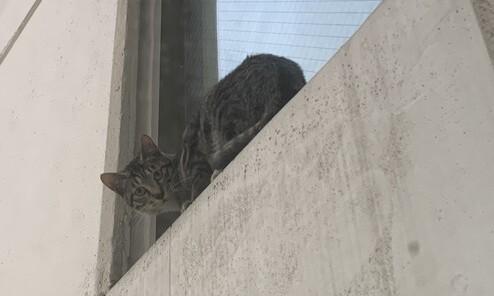 '21층 고양이 추락사' 막을 수 있었을까요?
