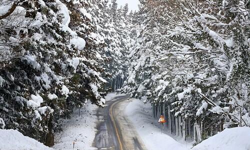 흰 눈 입고 있는 사려니숲길~