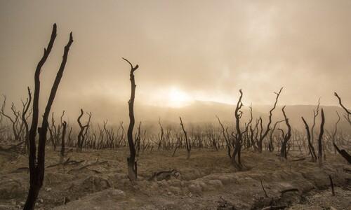 2020년대 세계 위협 요인…'톱5' 모두 환경 문제