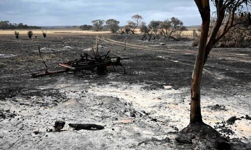 호주 야생동물 천국 '캥거루 아일랜드', 산불로 '죽음의 땅' 돼