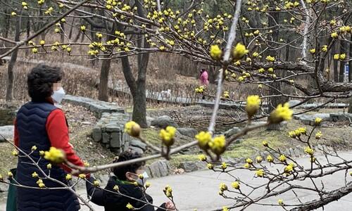[한 장의 다큐] 그래도 봄은 오고 있습니다