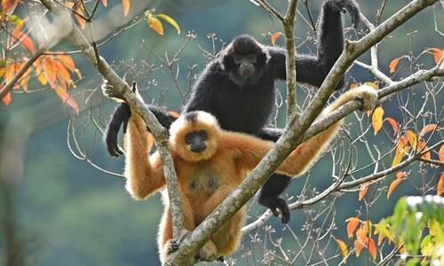 '하이난긴팔원숭이' 5호 커플 소식이 특별한 이유