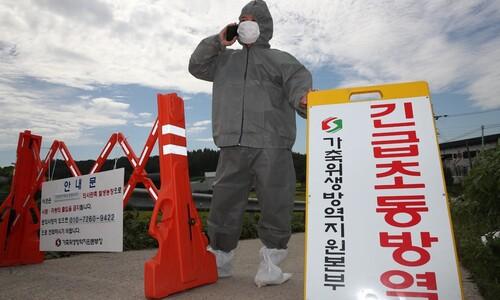 정부는 왜 '아프리카돼지열병 북한기원설'을 주장하나?
