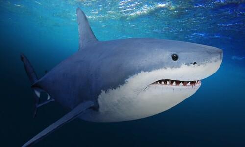 호주 해변 상어 비상