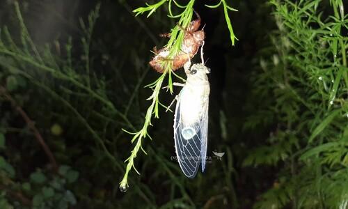 깔따구·대벌레·매미나방…'돌발 해충'을 위한 변명