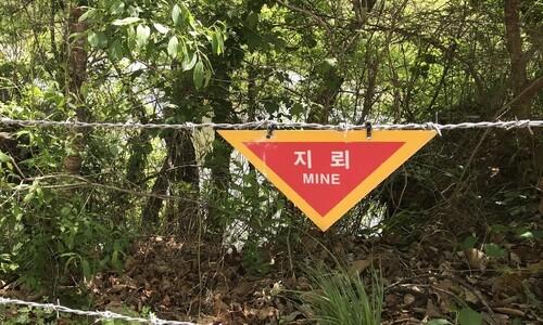 """군, 철원·화천서 유실된 지뢰 3발 수거…""""침수지역 탐색 지속"""""""