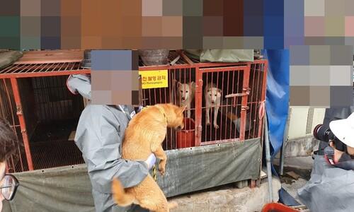 '모란시장과 어깨 겨누던' 부산 구포개시장서 동물사랑 축제