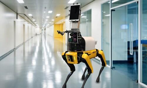 닥터가 된 로봇개...2미터 거리서 생체신호 잰다