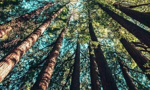 자연을 듣는다...'세계 숲소리 지도' 나왔다