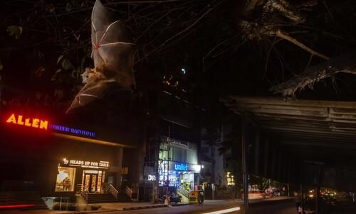 '니가 왜 거기서 나와'…인도 '실리콘밸리'의 네온 불빛 속 박쥐