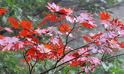 가을, 그리고 설악