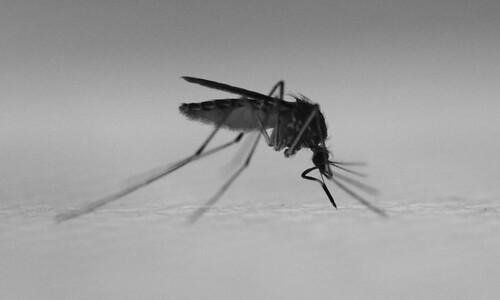 모기, 물려야 하는데 물릴 순 없어서…인공 피부 개발
