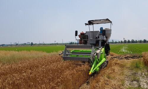 정부 식량위기 핵심 대책이 '해외 곡물 반입명령'?