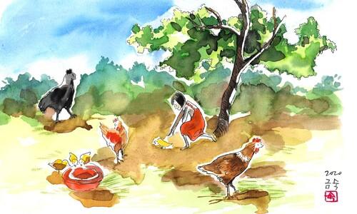 닭은 닭이다