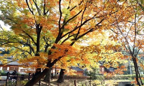 한옥마을의 가을