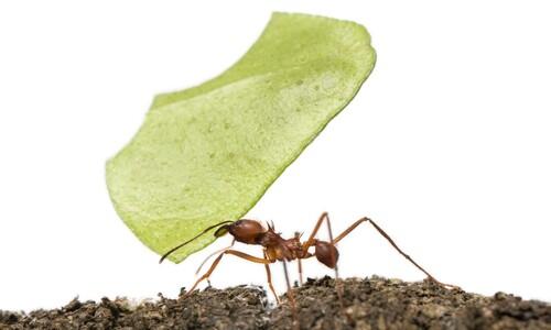 개미는 왜 '힘이 장사'일까