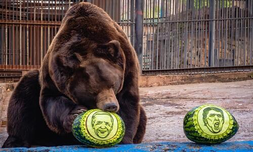 트럼프와 바이든…러시아 곰의 선택은?